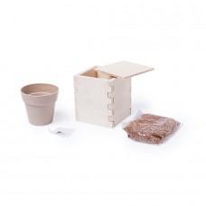 Горшочек для выращивания мяты с семенами (6-8шт) в коробке MERIN